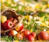Яблоки: польза и вред для здоровья, красоты и похудения