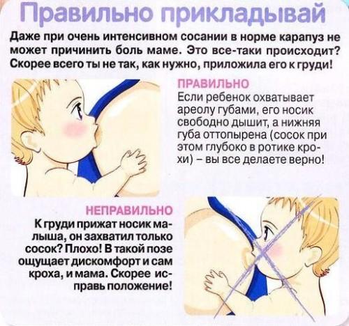 правила кормления