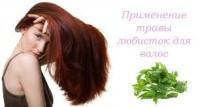 любисток для волос