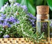 Розмарин и масло розмарина: сбор, заготовка, применение, рецепты, лечебные свойства и противопоказания