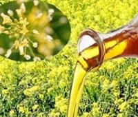 Рыжиковое масло: полезные свойства, хранение, состав, как принимать и противопоказания