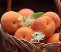 Абрикосы: состав, калорийность, польза и вред для здоровья и красоты