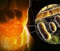 Дисбактериоз кишечника: причины, симптомы, питание и лечение у взрослых