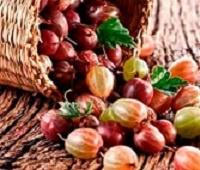 Крыжовник: состав, калорийность, польза и вред для здоровья и красоты