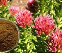 Настойка (экстракт) родиолы розовой: как приготовить и инструкция по применению