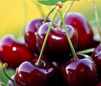 Черешня: состав, калорийность, норма в день, польза и вред для здоровья и красоты