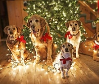 В чем встречать Новый 2018 год Жёлтой Земляной Собаки