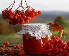 рябина красная заготовки