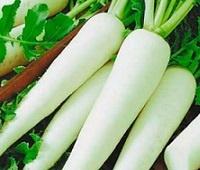 Японская редька дайкон: калории, норма в день, польза и вред для организма человека