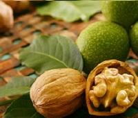 Грецкий орех (перегородки, скорлупа, масло и зеленые орехи): лечебные свойства и противопоказания