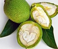 Зеленый грецкий орех полезные свойства и противопоказания