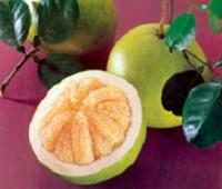 Помело фрукт: калорийность, полезные свойства для организма и для похудения