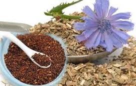Цикорий: сбор, заготовка, лечебные свойства для женщин и детей. Цикорий для похудения.