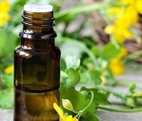 Масло чистотела: рецепт приготовления, полезные свойства и применение для здоровья и красоты