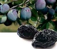 Чернослив свежий и сушеный: состав, калории, польза и вред для организма