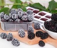 Как правильно заморозить ежевику на зиму: рецепты с сахаром и без сахара