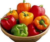 Болгарский перец: состав, калорийность, польза и вред для здоровья мужчин и женщин