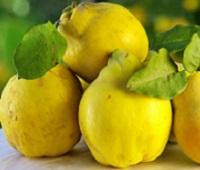 Айва: состав, калорийность, польза и вред для здоровья и красоты