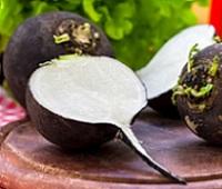 Черная редька и сок черной редьки: польза, вред, рецепты с медом от кашля и как принимать