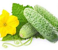 Огурцы: состав, калорийность, польза и вред для здоровья и красоты