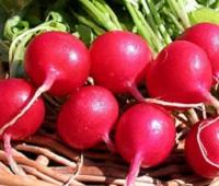 Редиска и ботва редиски: состав, калорийность, польза и вред здоровья и красоты