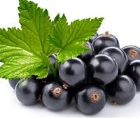 Черная смородина: состав, калорийность, полезные свойства и противопоказания для здоровья и красоты