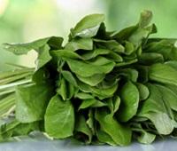 Щавель: состав, калорийность, польза и вред для здоровья и красоты
