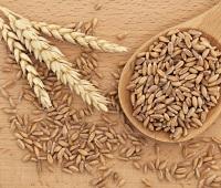 Полба: как выбрать, как хранить, как съесть, польза и вред для организма