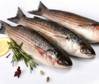Кефаль: что за рыба, где водится, состав, калорийность, польза