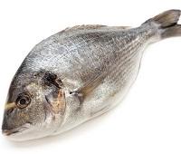 Дорадо: что за рыба, где водится, состав, калорийность, полезные свойства