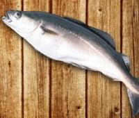 Сайда: что за рыба, где водится, как приготовить, польза и вред