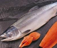 Чавыча: что за рыба, фото, описание, где водится, как приготовить, как выбрать, полезные свойства