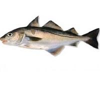 Пикша: что за рыба, где водится, описание, фото, польза, как приготовить