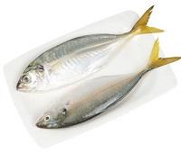 Желтохвостая лакедра: что за рыба, фото, описание, где водится, чем полезна, как приготовить