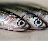 Анчоусы: что за рыба, описание, фото, с чем едят, что приготовить, чем заменить, польза