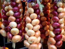 Сок лука: химический состав и полезные свойства для организма человека, применение в народной медицине