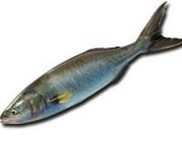 Лосось кахаваи: что за рыба, польза, описание, фото, как вкусно приготовить и вред