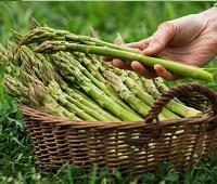 Спаржа: что за растение, состав, калорийность, норма в день, как есть, как приготовить, польза и вред