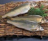 Молочная рыба (Ханос): что это за рыба, фото, где водится, описание, как приготовить, рецепты, польза