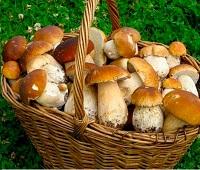 Как сушить грибы в домашних условиях - в духовке, на нитке, на солнце, в микроволновке, в электросушилке