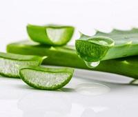 Сок алоэ: состав, польза, как приготовить, применение, рецепты для здоровья и красоты
