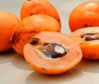 Мушмула: что это за фрукт, описание, фото, польза, как есть, применение и вред