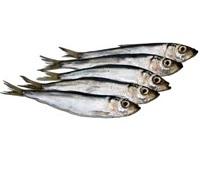 Салака: что за рыба, где водится, описание, фото, как приготовить, польза и вред