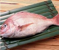 Морской красный окунь: что за рыба, где водится, фото, польза, как приготовить и вред